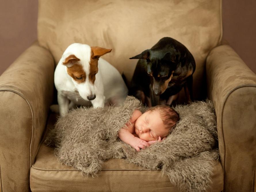 nyföddfoto med hundar